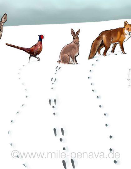 Tiere_im_Winter_8